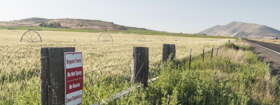 organic-field