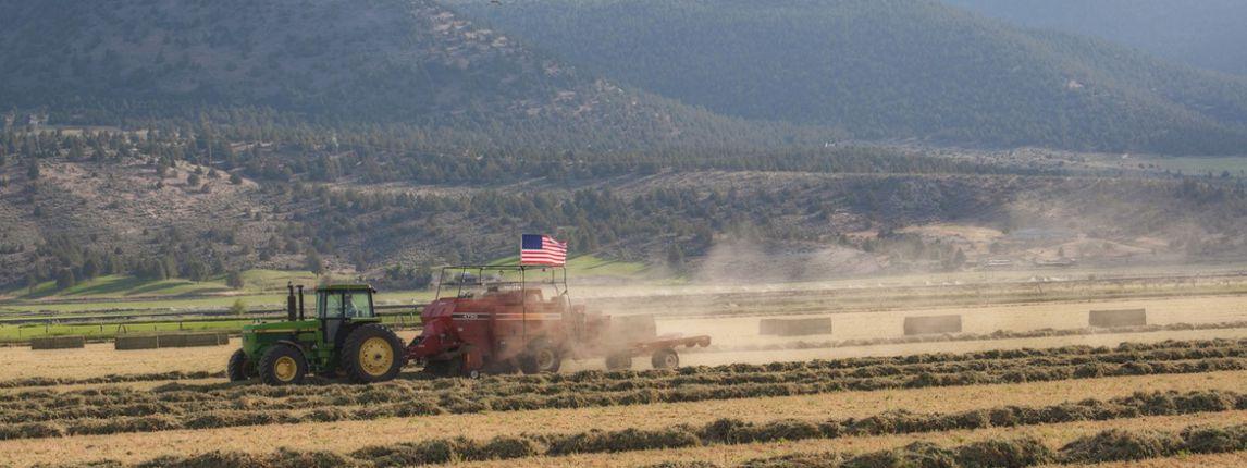 summer-farming